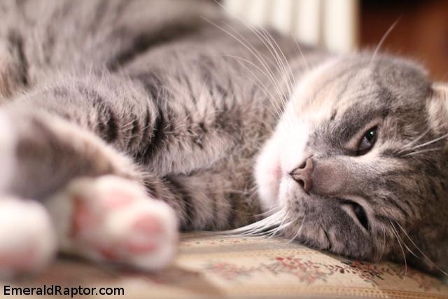 Stripete katt