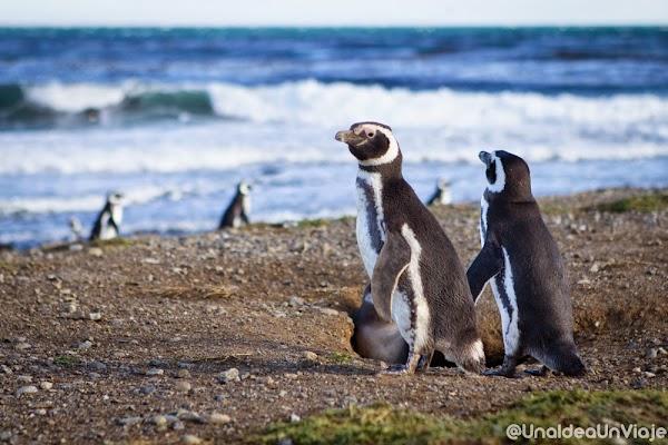 Puerto-Natales-Punta-Arenas-Visitas-imprescindibles-unaideaunviaje-11.jpg