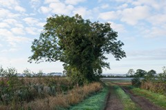 131006 Bognor Trees 032 ecopy