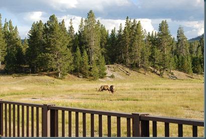 Yellowstone 028