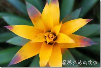 台南-2013台南公園百花祭72