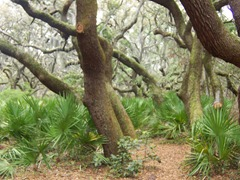 cumberland-island 042