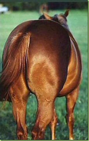 horses_ass