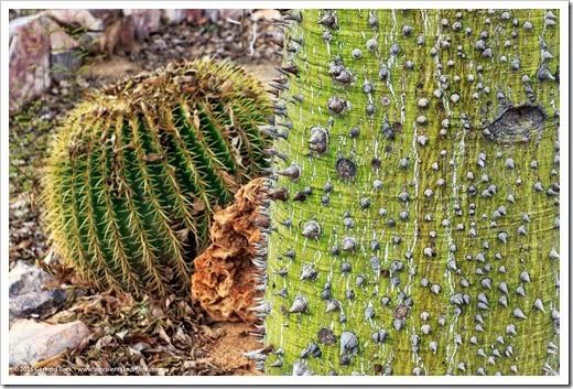 141231_Tucson_Bachs_0046