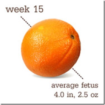 15 Weeks-Orange
