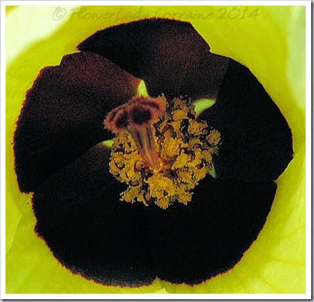 04-15-conf-rose2