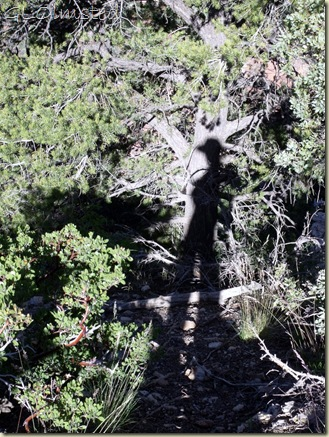 01 Shadow of Ranger Gaelyn along BAP trail NR GRCA NP AZ (768x1024)