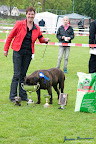 20100513-Bullmastiff-Clubmatch_31193.jpg
