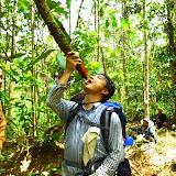 木の枝から水分を補給する