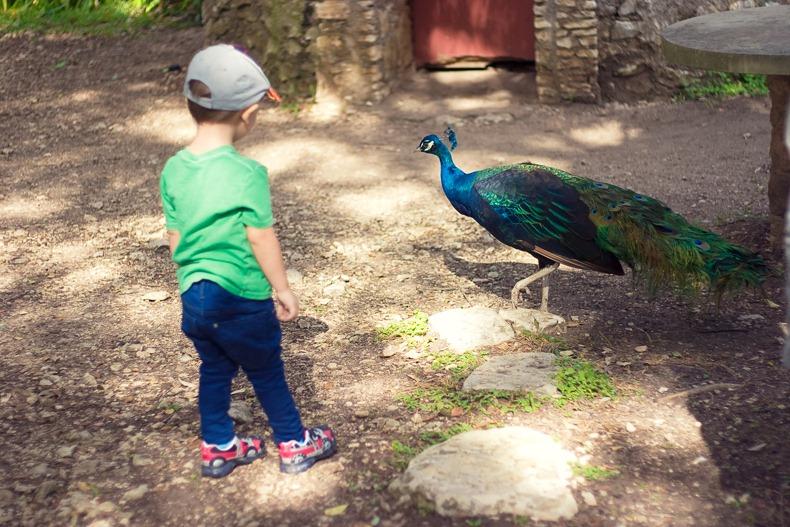 toddler_austin_Texas