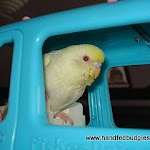 Jan 24-11 Budgie & Barbie car  Eggie.JPG