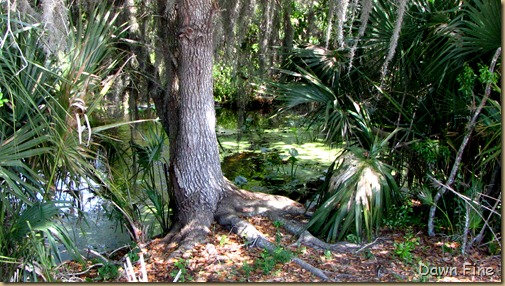 OrlandoWetlands_164