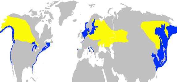 31_Podiceps_grisegena_-range_map-2c