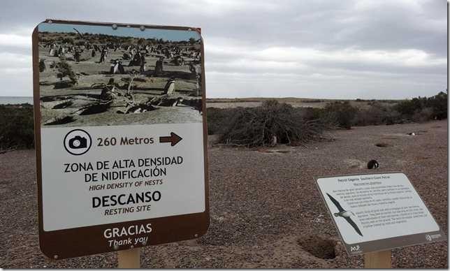 Punta_Tombo_DSC09824