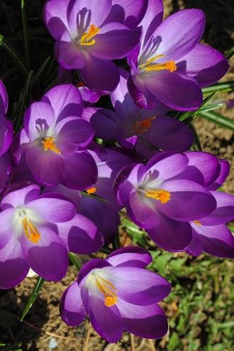 2012-03-18 153352 007.jpg