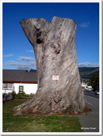 Otterson's Gum, Richmond. 158 years old but felled in 2005 for safety reasons.