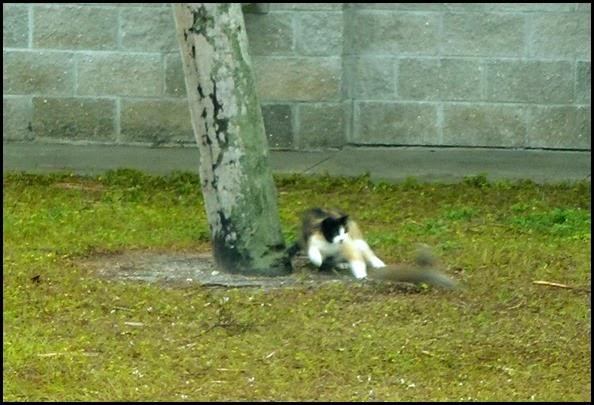 02c - Stalking Cat