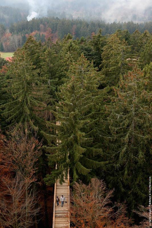 bavaria-treetop-walk-1