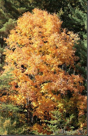 CF_Autumn2
