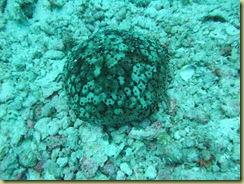 Soft Corals 5