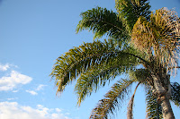 Palms and blue sky