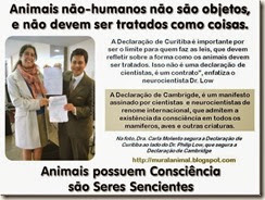 Animais possuem Consciência_thumb[1]