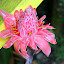 Beautiful Flowers At The Botanic Garden - Castries, St. Lucia