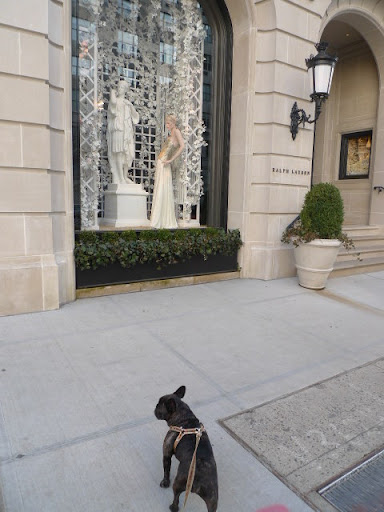 Sharkey, while window shopping and meeting new dogs is fun, we should really should stop by Martha's office and catch up on a little work.  We are, after all, famous entrepreneur Frenchies!