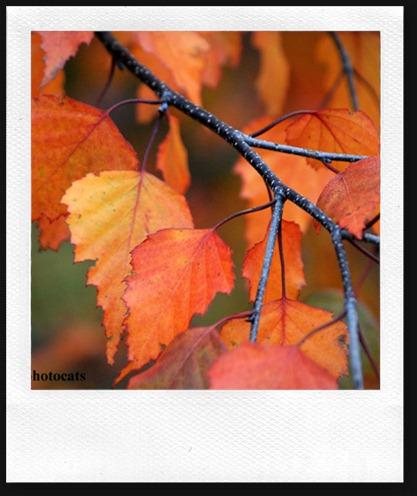 IMG_4410 Leaves
