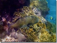 Snorkeling at 20 15 111S 169 46 750E_05 31 14_0068