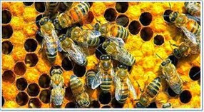 Amazing Pictures of Animals, Photo, Nature, Incredibel, Funny, Zoo, Bee, Insetcs, Anthophila, Alex (17)