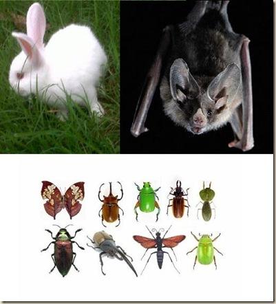 La Biblia y la Zoologia