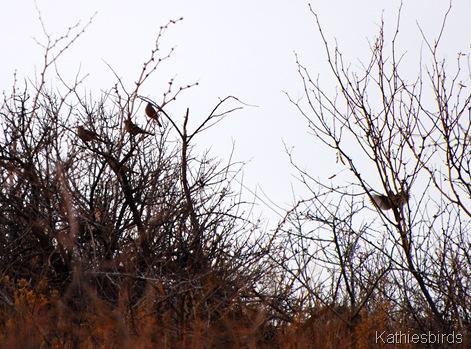 25. sparrows-kab