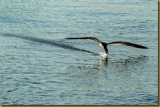 Front Beach Walk- GB-20120623-101 (web)