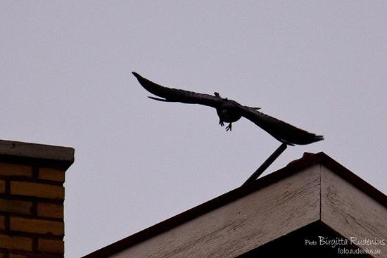 bird_20111018_tak