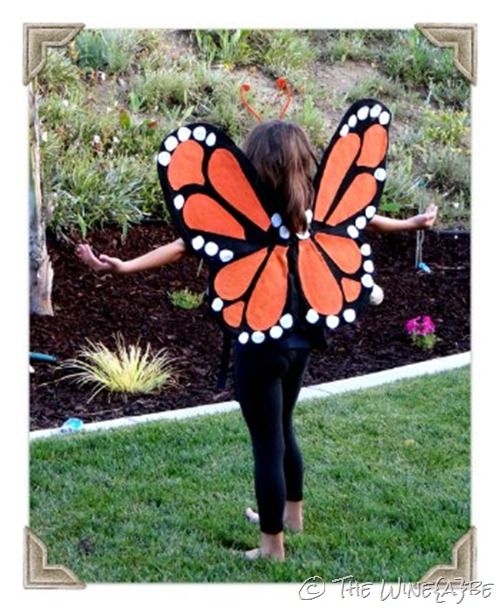 monarch_butterfly_1