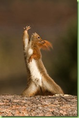squirrel saturday night fever