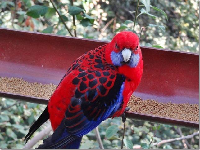 Santiago_Zoo_DSC03827