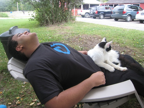 Relaxing attracts cats