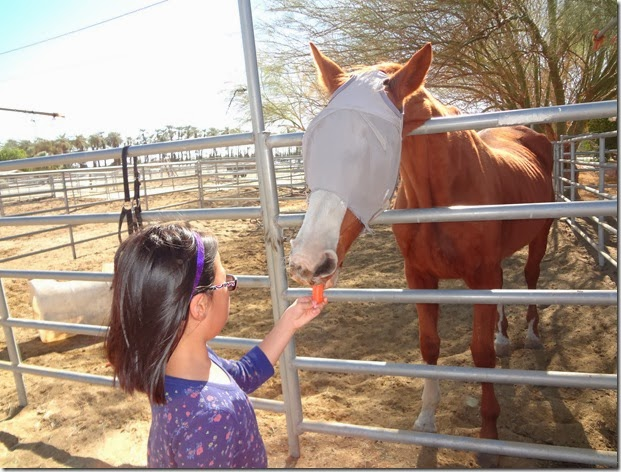 Epona Horse 066
