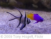 'Fish' photo (c) 2009, Tony Hisgett - license: http://creativecommons.org/licenses/by/2.0/