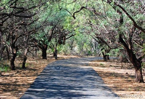 9. mesquite bosque-kab
