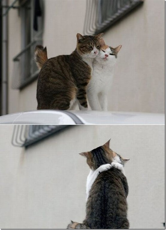 Vem cá, me dá um abraço