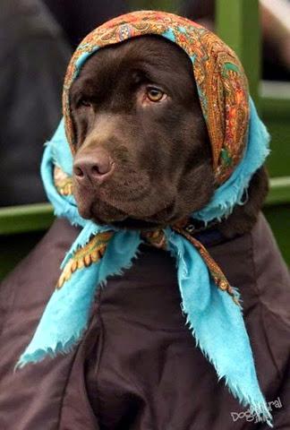 Собака в платочке, как бабушка