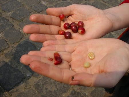Guatemala: local coffee