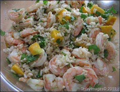 tropical shrimp0617 (1)