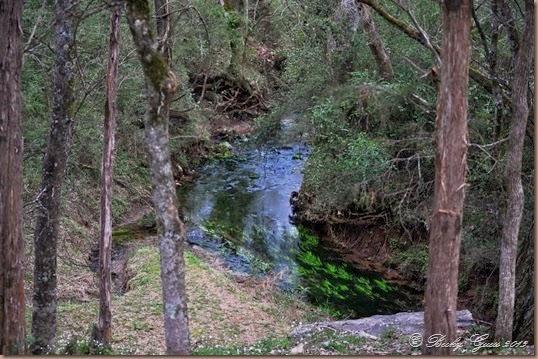 03-22-14 Buzzard Creek on Natchez Trace 02