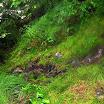 norwegia2012_70.jpg