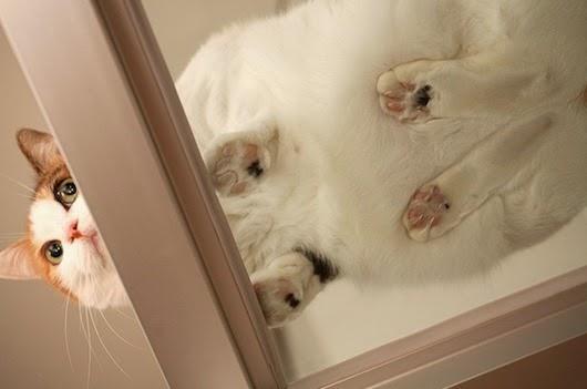вид-снизу-коты-на-стеклянных-столах-11