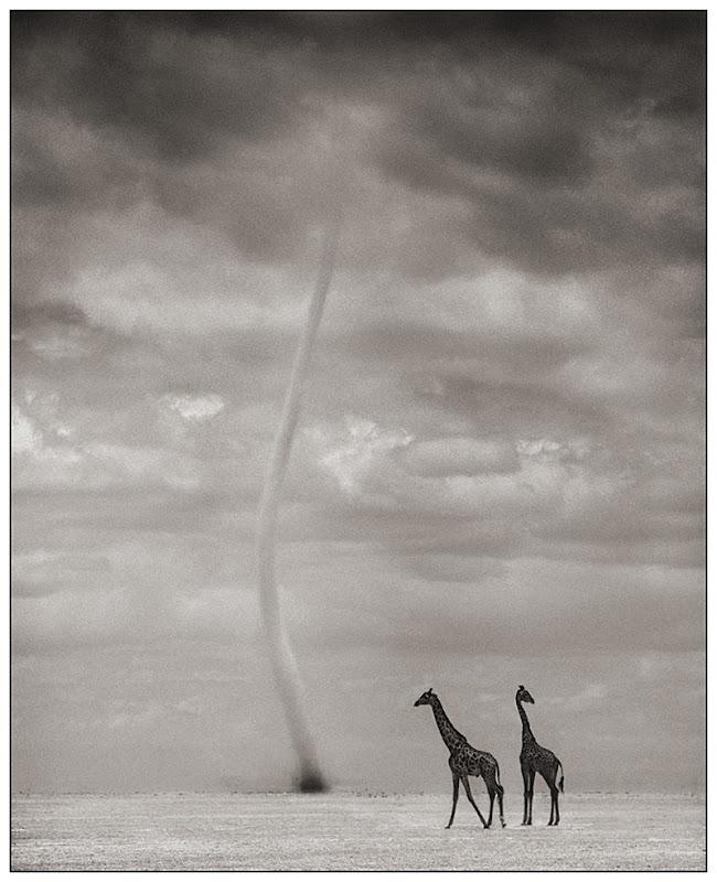 GiraffesDustDevil